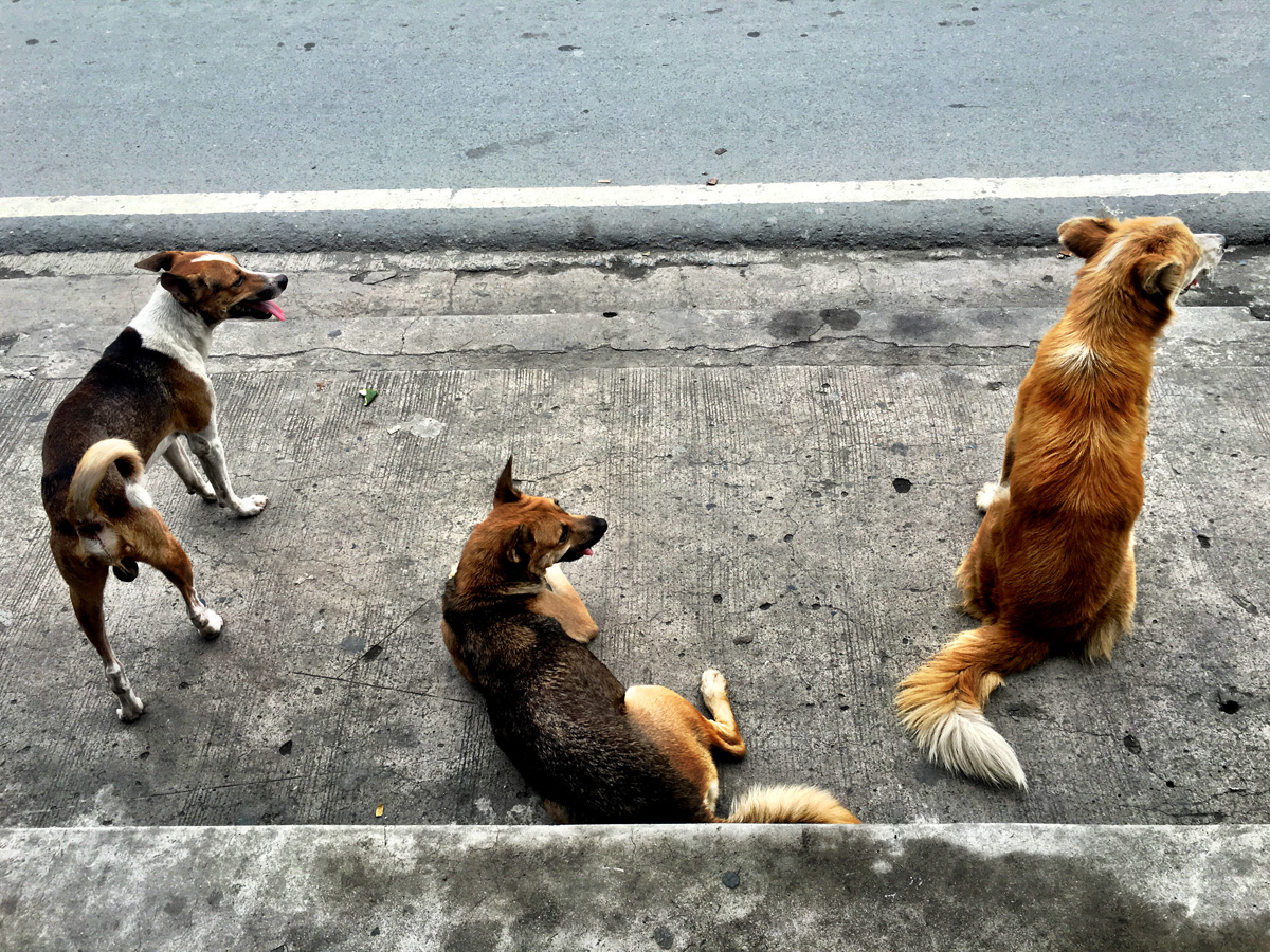 These dogs watched a fried chicken vendor s every move.